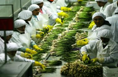 La agroindustria fue el sector que más empleos generó el último año. (Foto: Andina)