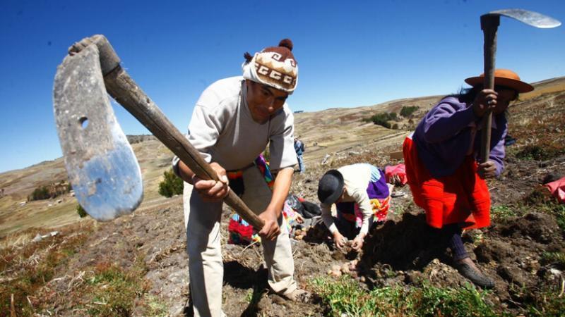 El crecimiento del sector agrícola ayuda a diversificar la economía. (Foto: Andina)