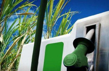 En Perú no se promovió biodiésel, señalan empresas de la cadena de la agroindustria de la palma aceitera y los industriales productores.