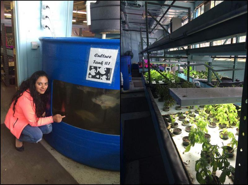 AcuaponiCax es uno de los proyectos seleccionados como beneficiarios de la 5ta Generación de StartUp Perú. En la foto Netty Malca, quien lidera Acuaponicax.