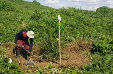 La participación nacional en materia de biocombustibles sería mínima en comparación con la importación. Foto: Junpalma.