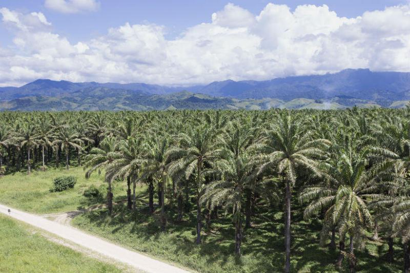 31 palmicultores y proveedores del Grupo Palmas trabajarán en mejorar los rendimientos de sus cultivos e implementando buenas prácticas del estándar internacional RSPO.
