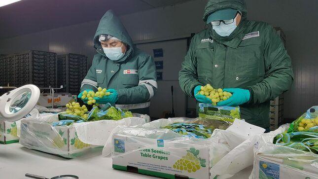 Reanudarán exportación peruana de uva al mercado ecuatoriano