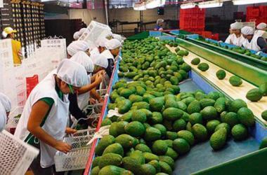 alimentos agroexportaciones