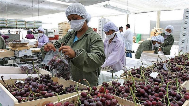 uva peruana exportación