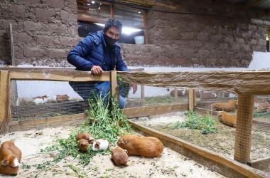 Ayacucho: Emprendedor impulsa crianza de cuyes para mejorar economía familiar