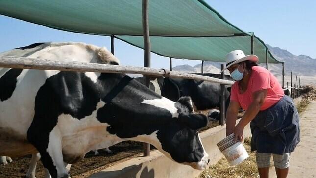 Implementan programa para reactivación de sector ganadero lechero