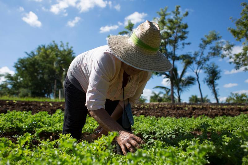 emprendedores agro