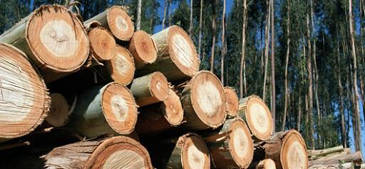 industria forestal sostenible