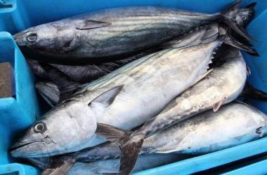 Conoce las oportunidades de exportación de nuestra pesca no tradicional en Europa y Asia