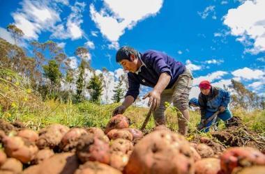 Más de 286,000 agricultores accedieron a créditos en última década, informa Agrobanco