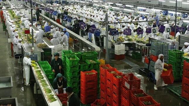 Agroexportaciones peruanas crecieron alrededor de 9 % en primer trimestre