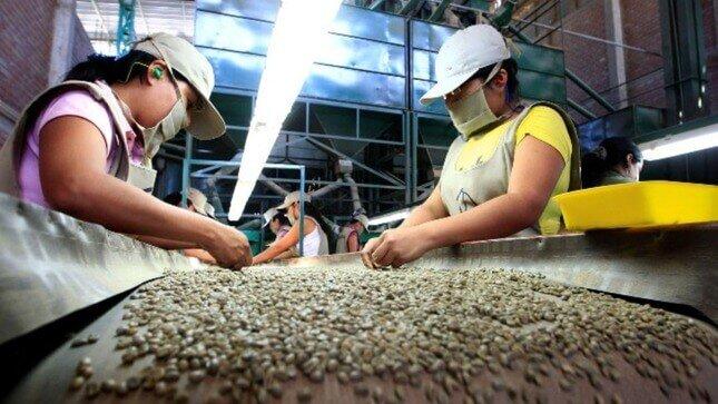 Café peruano conquista 44 mercados del mundo