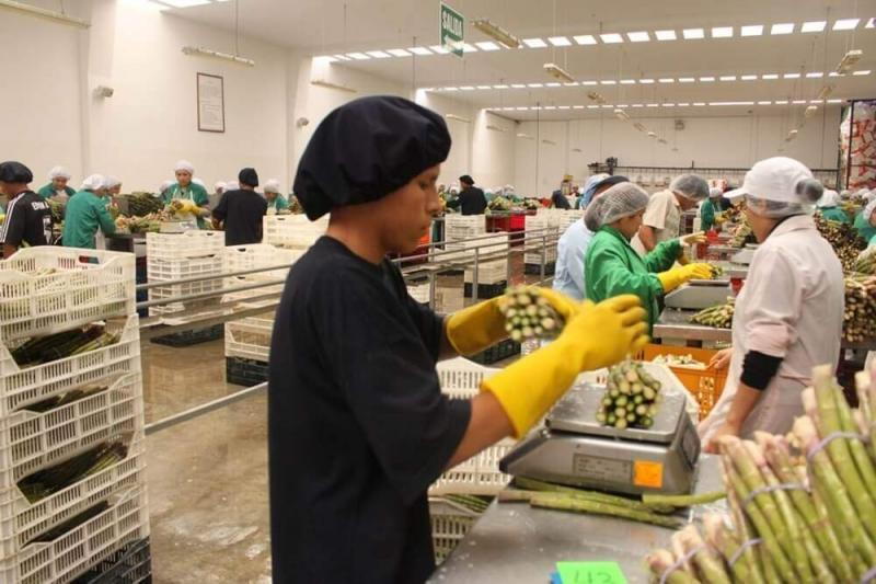 El 79.4% de las empresas exportadoras peruanas en 2020 fueron mypes