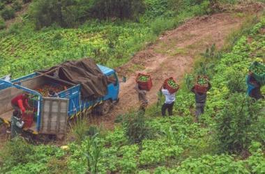Oficializan ley para reactivación del agro y fortalecimiento del Agrobanco