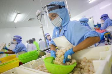 Gobierno publica política para impulsar empleo decente en Perú: ¿En qué consiste?