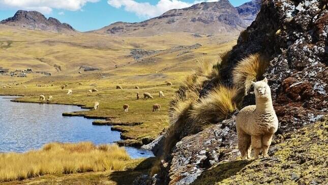 Perú se une al gigante tecnológico para promocionar el turismo y la alpaca en China