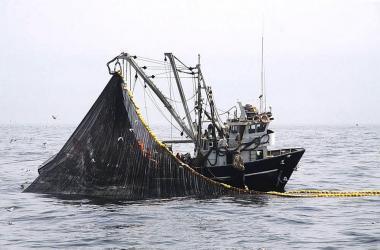 Cuatro productos pesqueros peruanos con potencial para exportar a 10 mercados