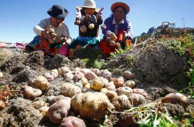 agricultura familiar dia del campesino