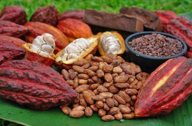 cacao Amazonas