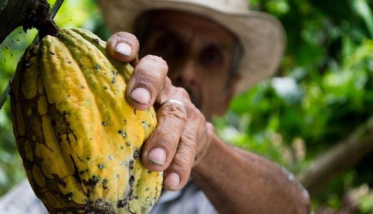 programa ayuda agricultores cacao