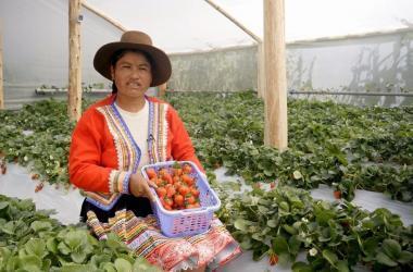 mujeres en la agricultura peru