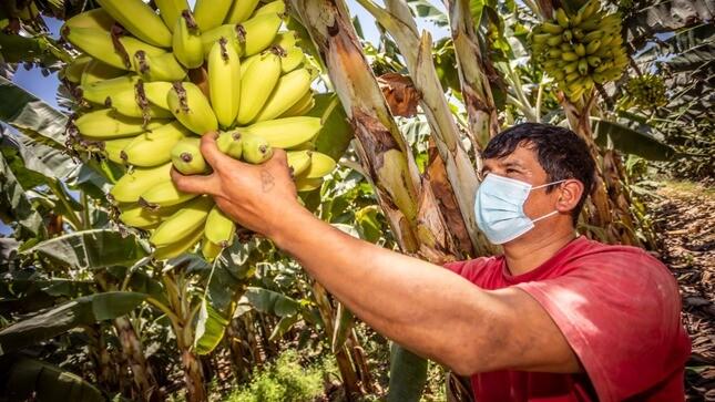 Lanzan padrón para dar identidad digital a más de 2 millones de productores agrarios