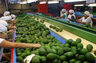 Agroexportaciones peruanas aumentaron 19% entre enero y mayo