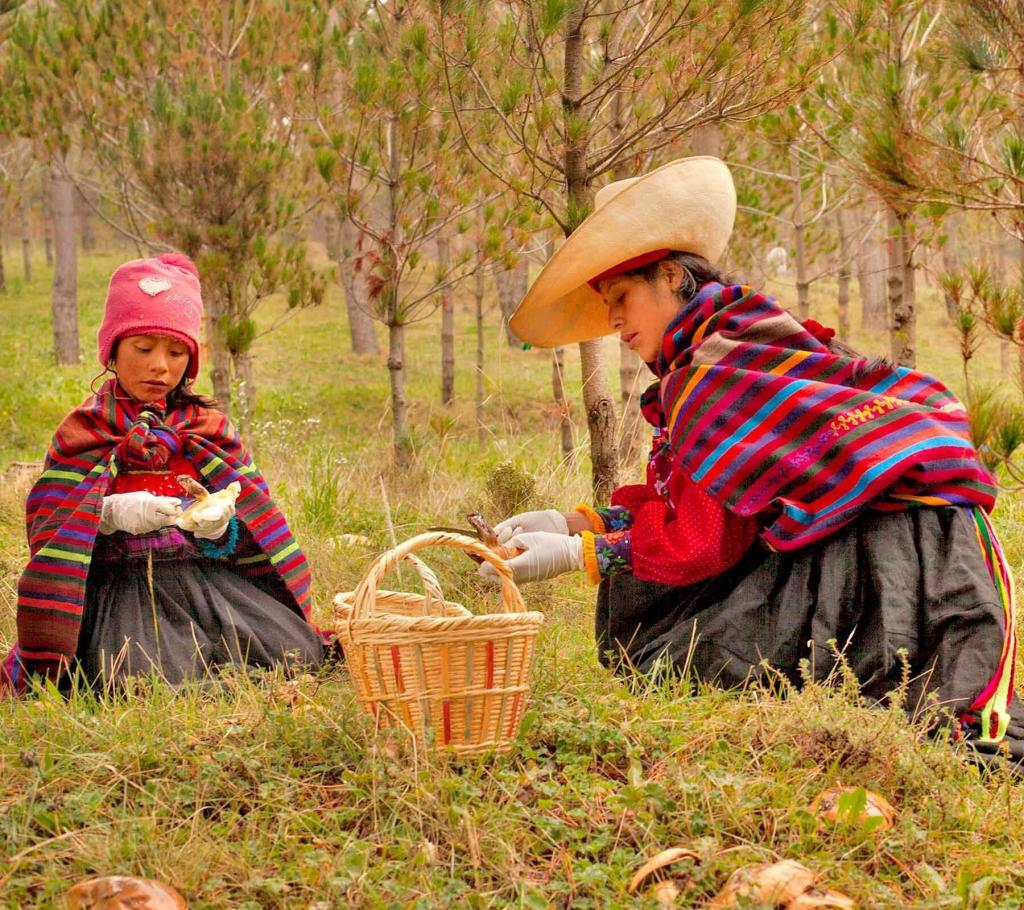 emprendimiento peruano hongos