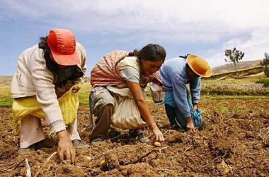 """Retorno al pasado con la """"nueva"""" política agrícola - Por: Luis Miguel Castilla"""