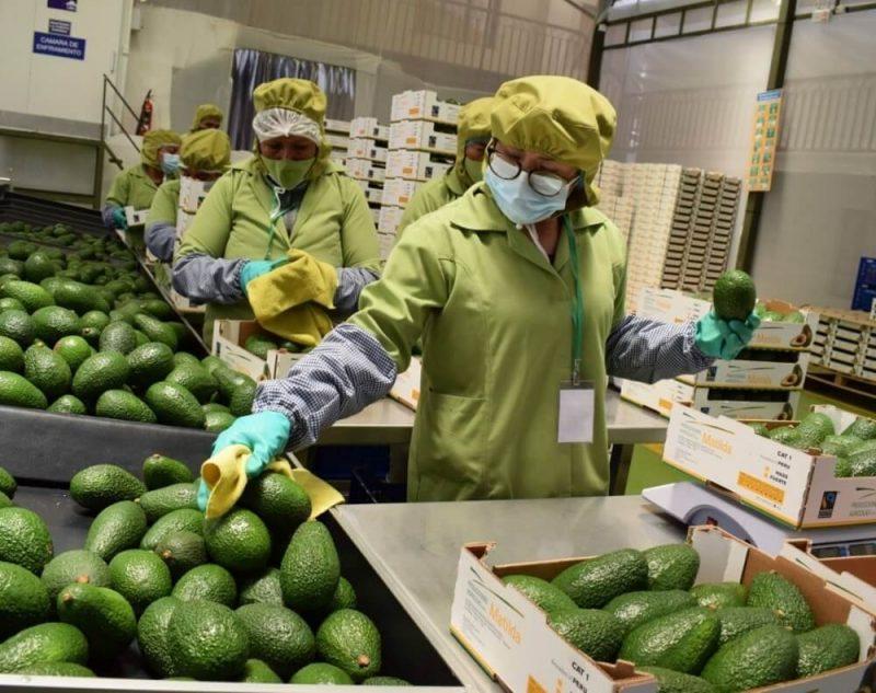 Empleos generados por exportaciones superaron el millón y medio