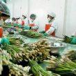 Exportaciones peruanas generaron 1.24 millones de puestos de trabajo