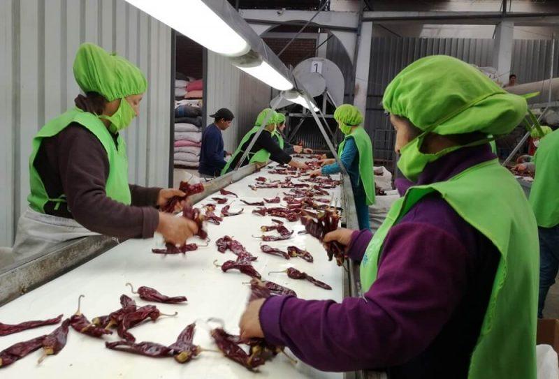 Adex: más de 6 mil empresas exportaron durante el primer semestre