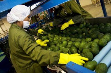 Exportaciones peruanas de alimentos sumarían US$ 10,000 millones este año