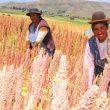Sector agropecuario repunta y crece 8.8% en junio, la cifra más alta del año