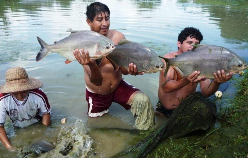 El 86 % de empresas acuícolas son informales, según Produce