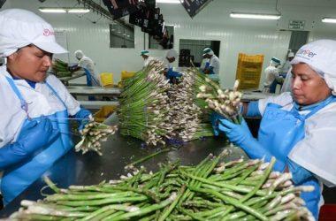 Sector agropecuario en Perú repunta y crece 11% en julio
