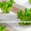 ¿Cómo hacer un cultivo hidropónico en casa?