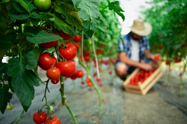Consejos para impulsar las ventas de los emprendedores agroexportadores