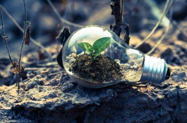 Desarrollo sostenible: ¿Cómo pueden contribuir las empresas?