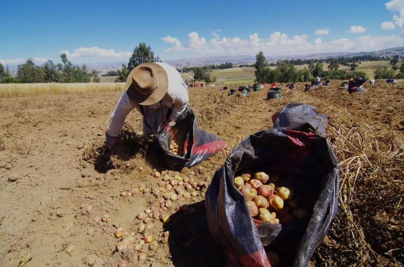 Bono Yanapay Perú ampliará su cobertura hacia pequeños agricultores, anuncia MEF