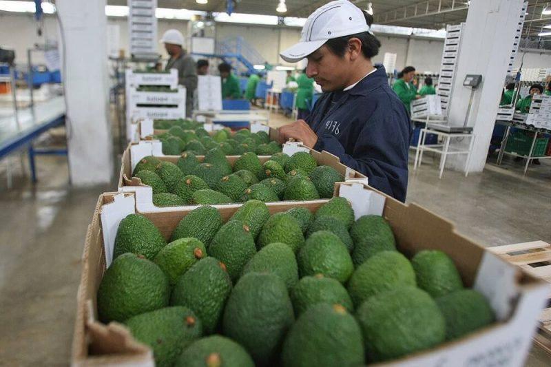 Agroexportaciones peruanas crecen 17% a agosto: ¿Qué productos lideraron envíos?