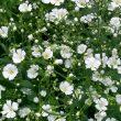 Exportaciones peruanas de flores crecieron 38%, según ADEX