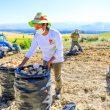 segunda reforma agraria ejes
